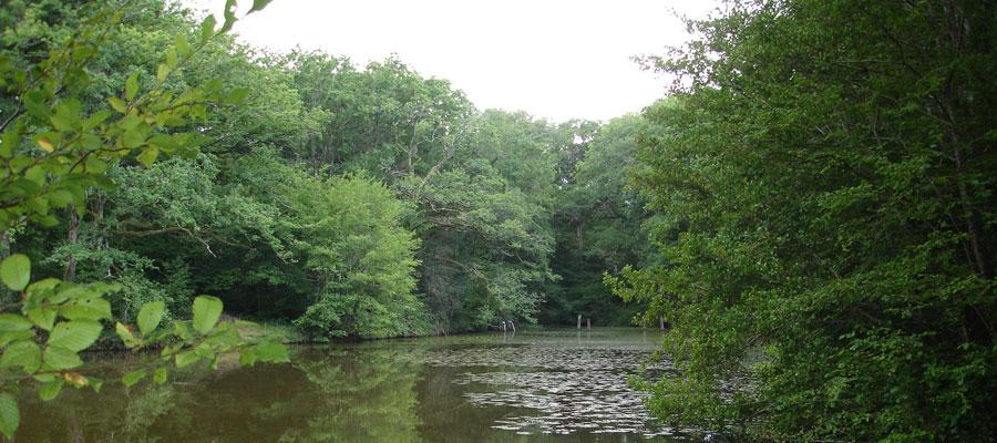 L'étang de Bois Lambert